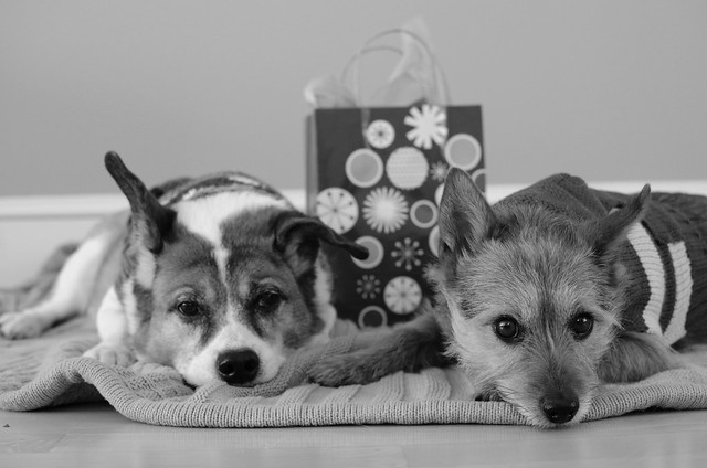 Holiday card outtake #3 (B&W version)