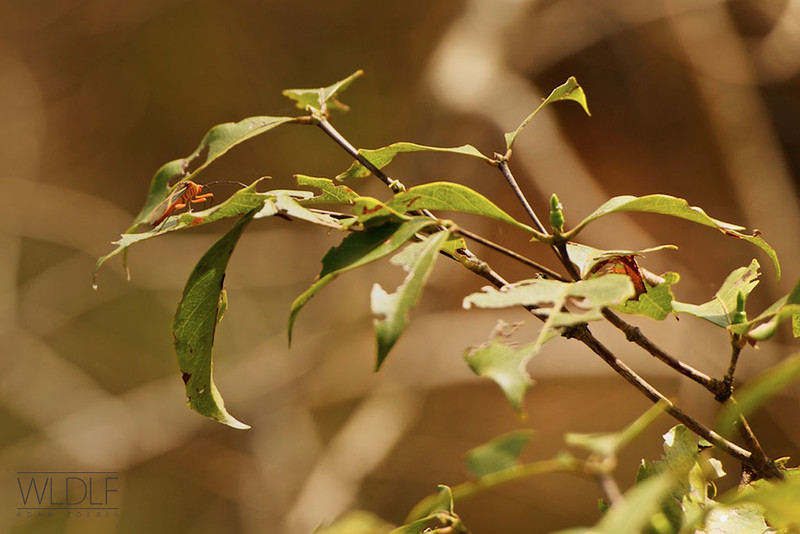 Bug - Buraco das Araras