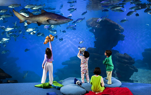palma aquarium canguro tiburon (1)