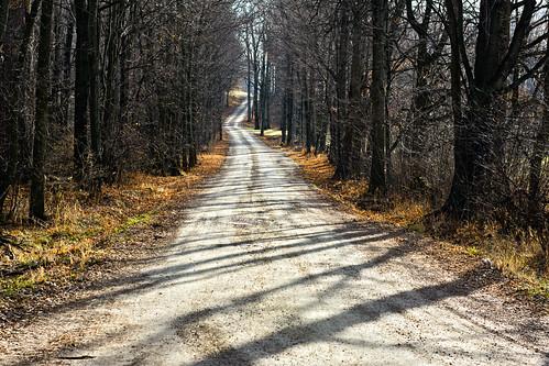 road trees back vermont december bare dirt