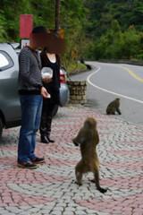 登仙橋旅客餵食獼猴。(網路截圖)
