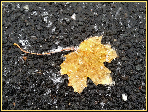 november winter snow gold leaf seasons noreaster