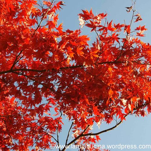 Herbstmesse 16_2012 11 06_8268