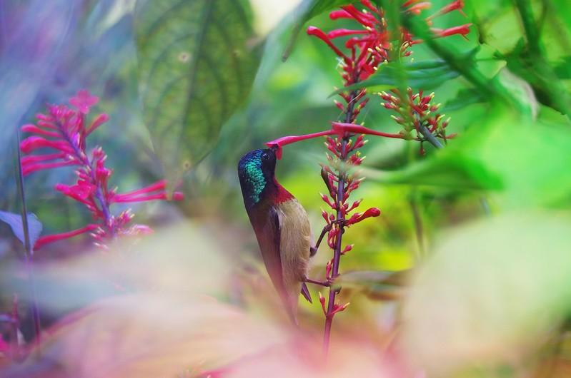 彩色的叢林