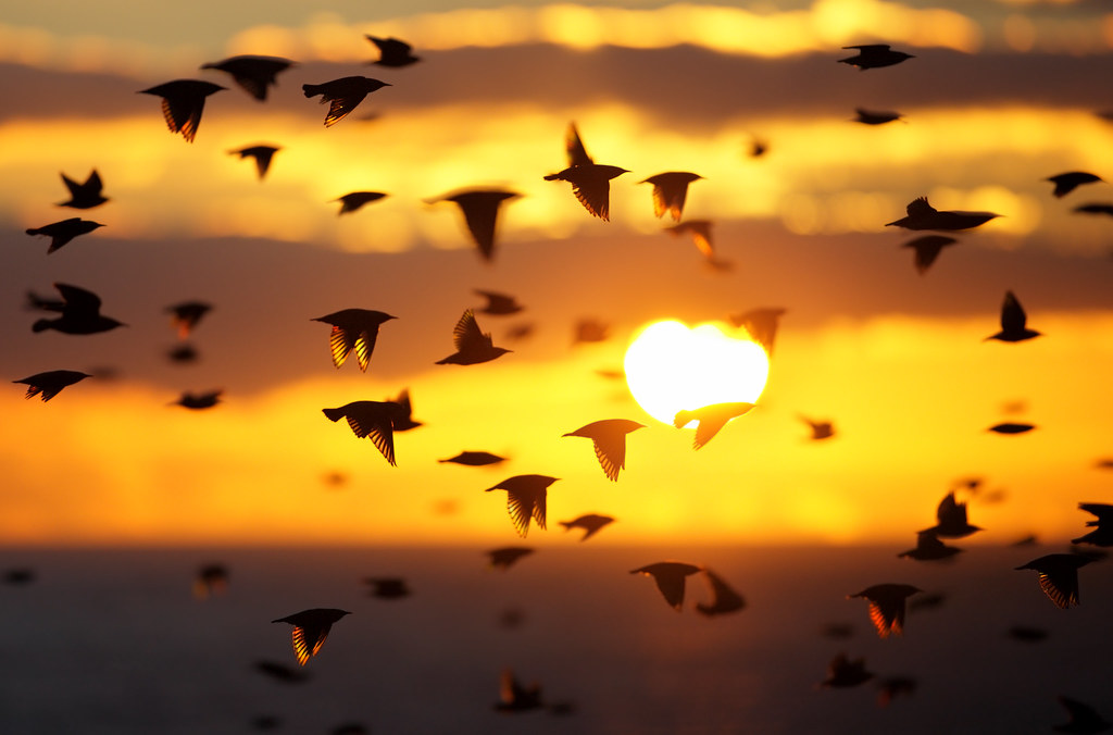 Star-ti-ling Sunset