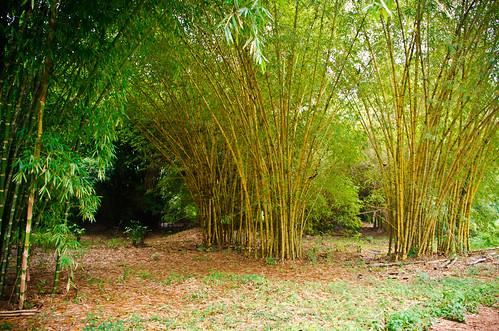 africa travel trees tree nature landscape nikon rainforest bamboo ghana jungle ashanti butterflysanctuary ashantiregion tamron18270 nikond5100