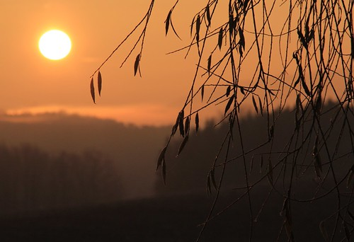 pink sun mist field sunrise germany dawn golden village hoarfrost thuringia soil twig goldensky yellowsky schackendorf