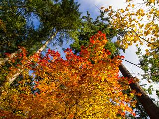 Fall Colours 2011