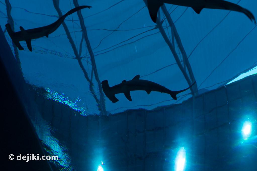 MLP_Sharks2