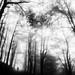 Nella nebbia... by Rocco Carnevale