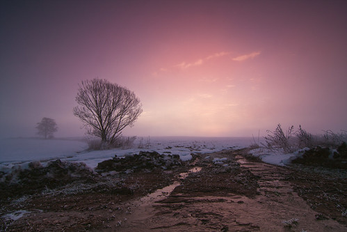 winter colors fog sunrise landscape pwwinter