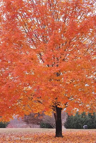 autumn trees fall nature leaves landscape outdoors