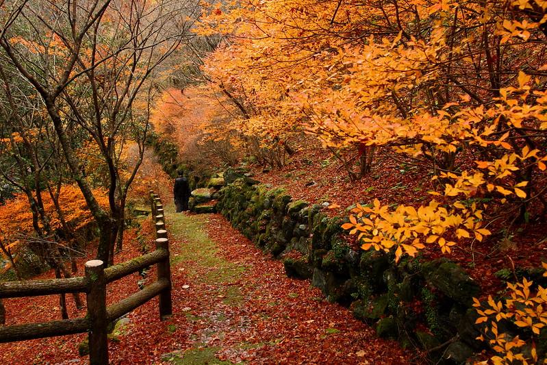 IMG_4789_11-23 Yasui Valley