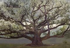<strong>AZIZ + CUCHER - </strong> Scenapse #7 (Ficus 3)<br />Aziz + Cucher, Scenapse #7 (Ficus 3), c-print on Endura Metallic paper with diasec mount, 103 cm x 155 cm, 2011