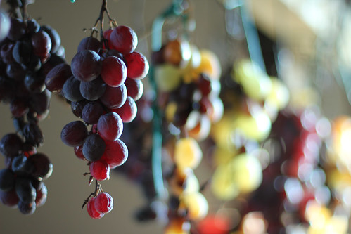 Grapes - Tenuta Cosimo Maria Masini