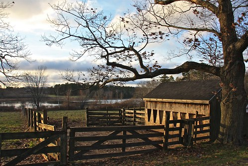 November Light on Aldermere Farm 04