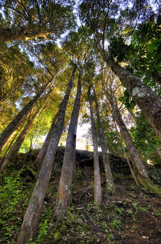 AH Reed Memorial Park Whangarei