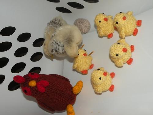 Chick photo 1