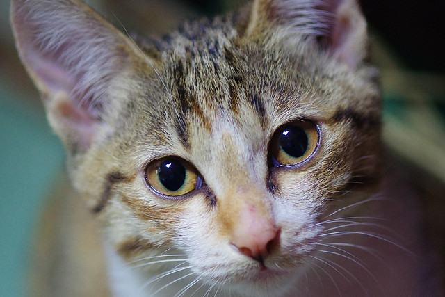 貓喵喵-喵喵貓-喵喵叫-貓貓叫