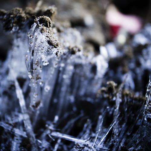 Ice Fungi, 2012, Kasai 02