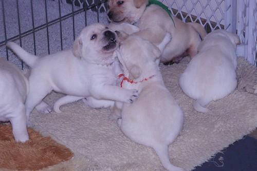 Daisy pups4weeks119