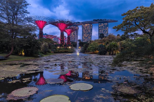 Future Nature; Naturaleza Futura (Gardens by the Bay and Marina Bay Sands, Singapore)