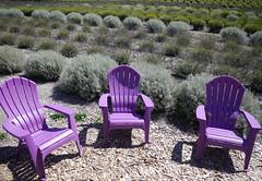 Lavender lounge  .  .  .