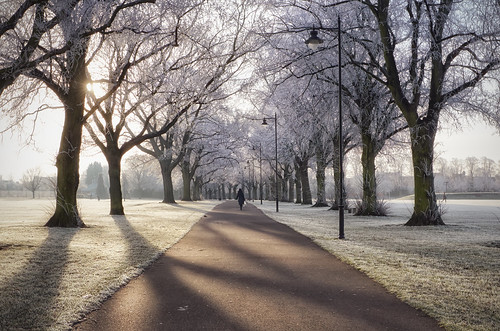 road winter light tree sunrise canon landscape frost path freezing tranquility lamppost ii dew balance awe wonderland magical f28 perfection hoar 6d lseries 1635mm beautyinnature thewayforward