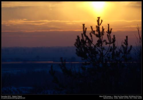 "tree sunrise poland pomorskie gdaå""sk"
