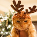 ChristmasCatTorture (10 of 10) by MrsLimestone