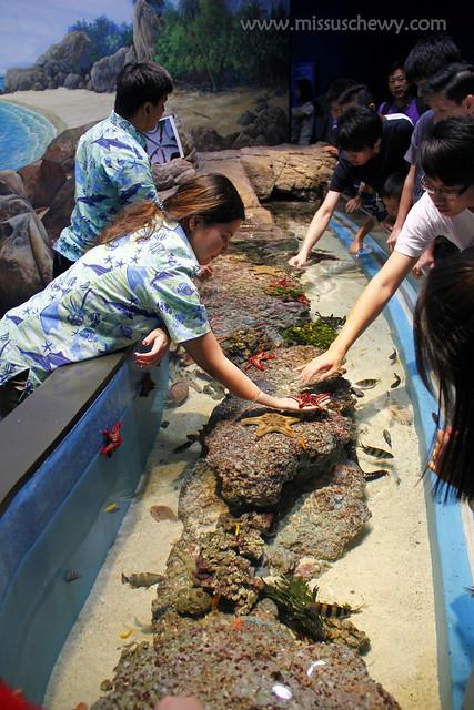 RWS S.E.A Aquarium 497