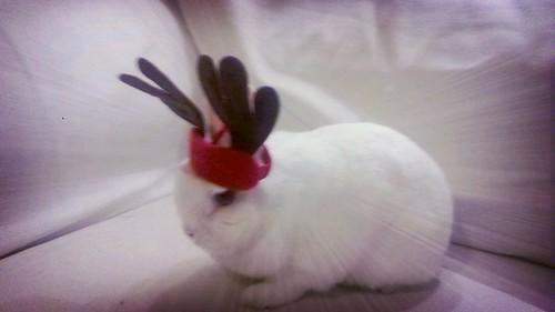 senator the reindeerbunny