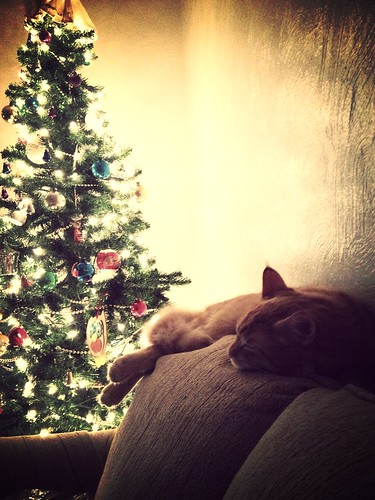 Radley Cat knows Christmas should end.