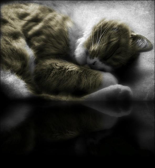 beautiful in sleep