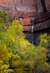 autumn - Zion National Park - 10-29-04  01