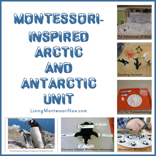 Montessori-Inspired Arctic and Antarctic Unit