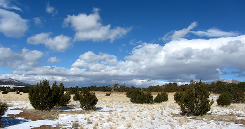 snowy new mexico