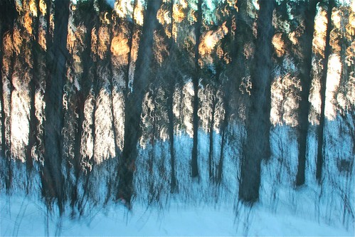 winter abstract tree forest edmonton icm intentionalcameramovement
