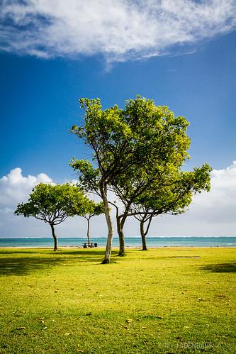 park trees light beach grass hawaii oahu lawn kualoa kualoaregionalpark