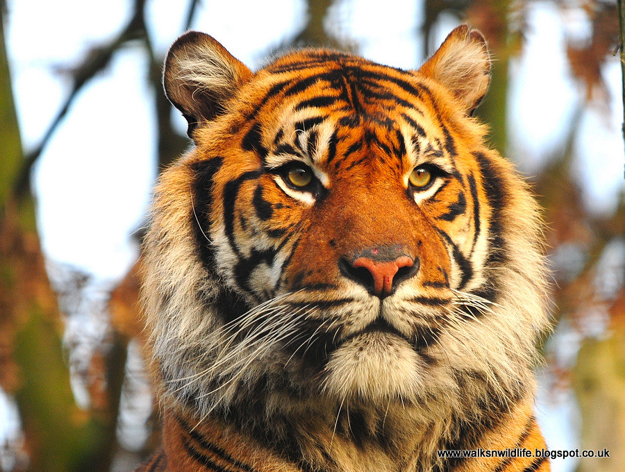 Chester Zoo 31.12.12 1384
