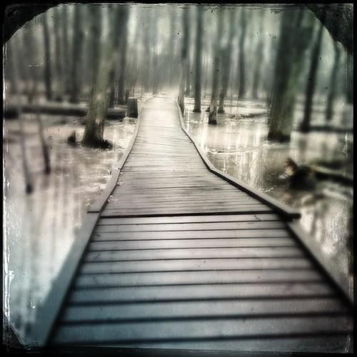 Swamp walk by @klawrenc