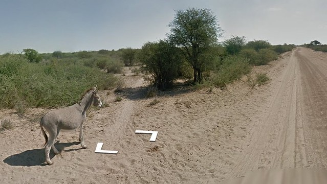 google street view car hit a donkey