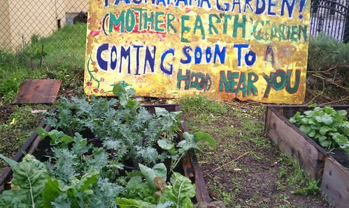 A picture of some greens growing in raised beds. Behind them is a painted sign that reads Mother Earth Garden--Coming Soon to a Hood Near You