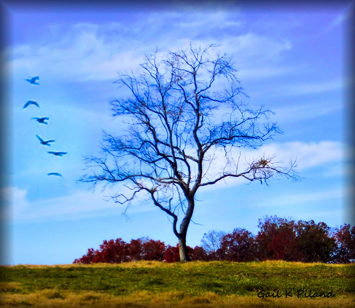 sky tree birds photoshop landscape gailpiland rememberthatmomentlevel1