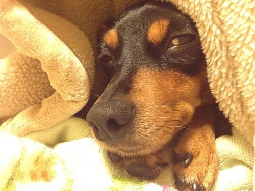 すごい眠そうでこちらをみる黒犬。