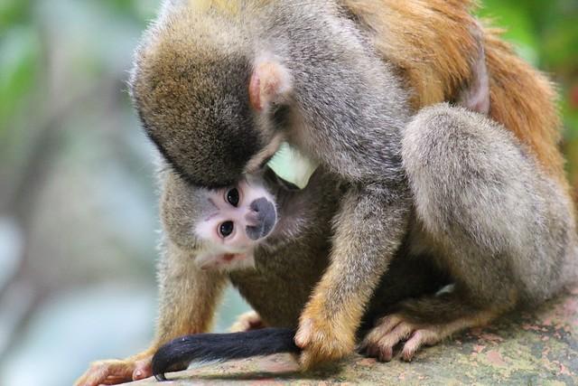 Monkeys_DSLR