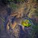 Lake Shore Frog by PhotoArtMarie