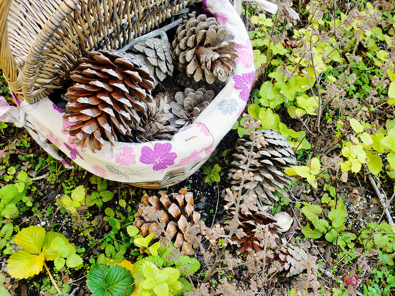 Pinecones inside a basket