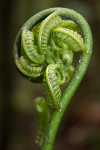 Malagasy rainforest