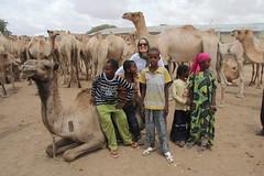 Camel Market (59)